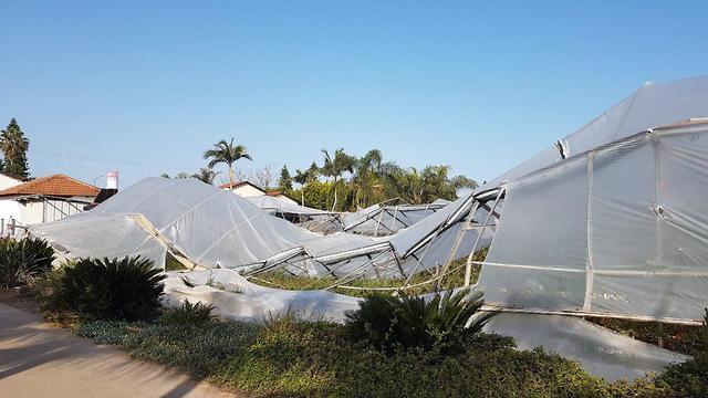 נזק לפירות בגלל ברד בפסח (צילום: אסף שמיר, קנט)