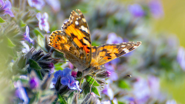 A butterfly rests on a flower on the Nahal Zimri nature trail (Photo: Nati Hochner)