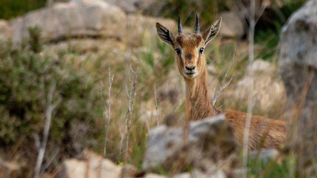 Wildlife on the Nahal Zimri nature trail (Photo: Yaakov Ben Bonan)