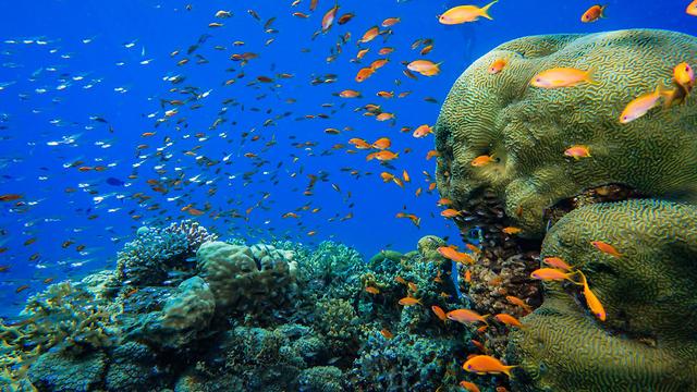 שמורת האלמוגים באילת  (צילום: חן טופיקייאן רשות הטבע והגנים)