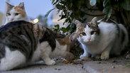Аномальная жара в Израиле: как уберечь животных от теплового удара