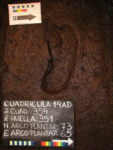 טביעת הרגל שהתגלתה ב-2010 (צילום: רויטרס)