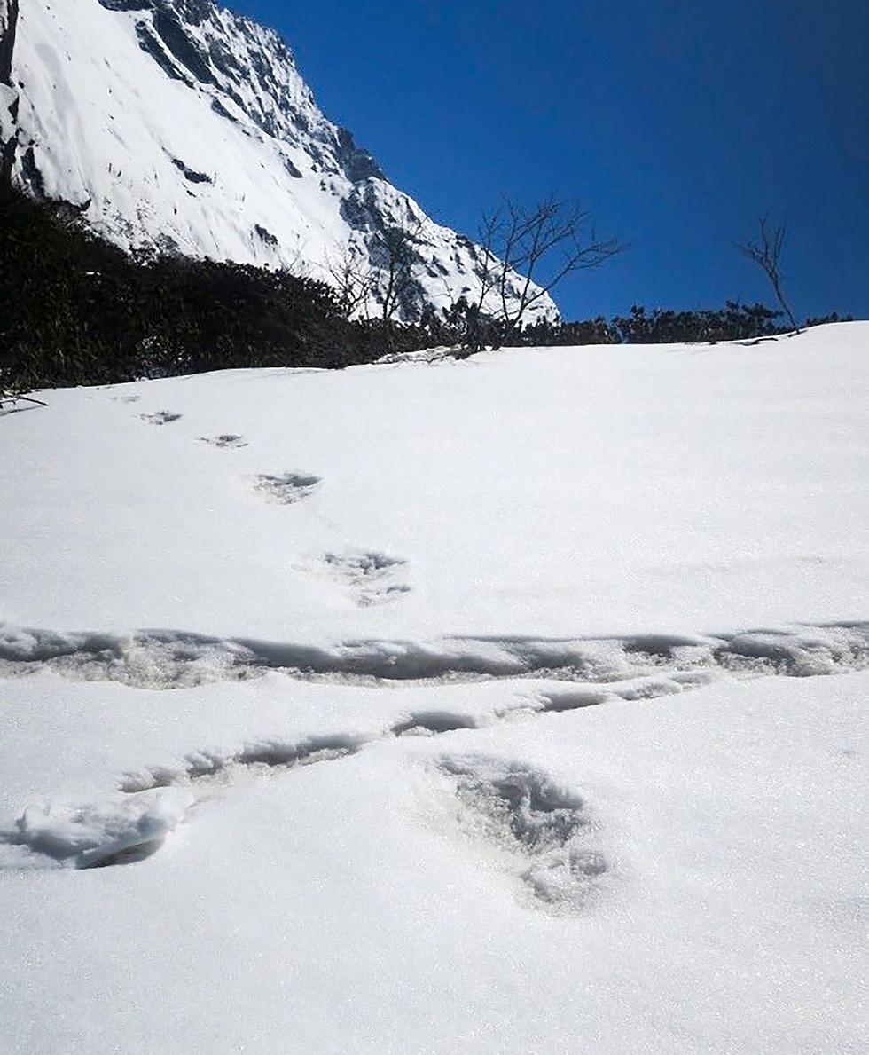 יטי צבא הודו נפאל הרי ה הימלאיה עקבות שלג (צילום: AFP)