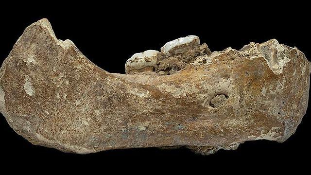 שבר של עצם לסת תחתונה שנמצאה במערה (צילום: רויטרס)