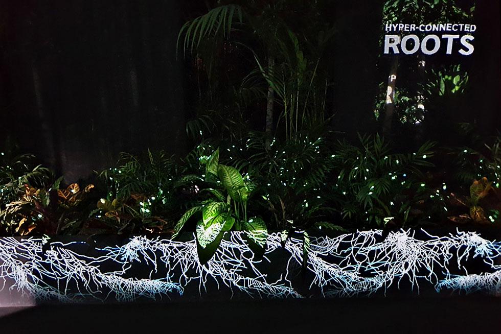 wood wide web, מיצב מתוךThe Nation of Plants, אחד מנושאי התערוכה Broken Nature, שאצרה  פאולה אנטונלי ושהגה Stefano Mancuso, מהמומחים המובילים בעולם בתחום הנוירוביולוגיה של עולם הצומח (צילום: סיגל נמיר)