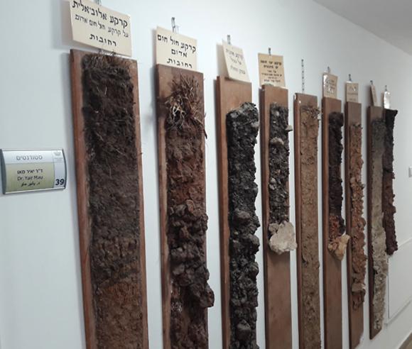 דוגמאות של קרקעות שהכין מוקדי עדיין תלויות בבניין המחלקה לחקר הקרקע והמים בפקולטה לחקלאות (צילום: איתי נבו)