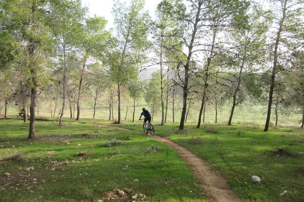 יער להב (צילום: דב רובין)