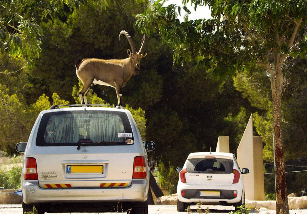 יעל על רכב במצפה רמון (צילום:  Alex Lanchester / BBC | מתוך