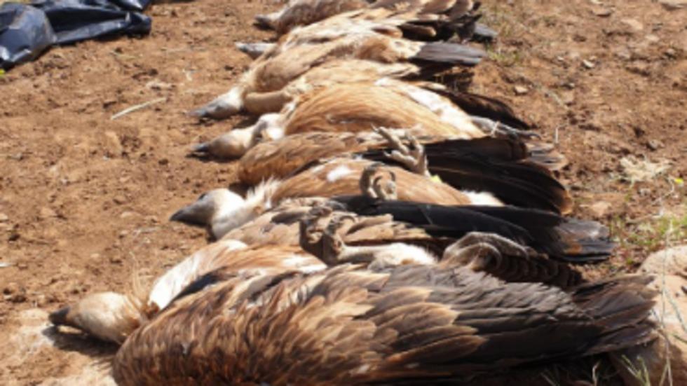 Отравленные птицы. Фото: Управление парков