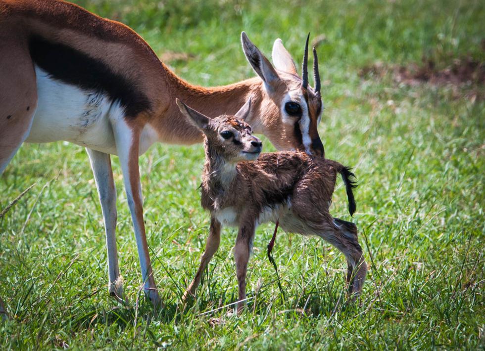 ברדלסים | צביית תומסון ועופר בקניה (צילום: shutterstock)