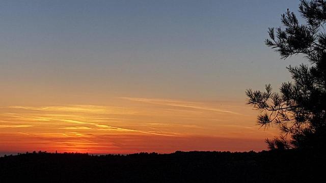 שקיעה ביערות הכרמל (צילום: אלעד גרשגורן)