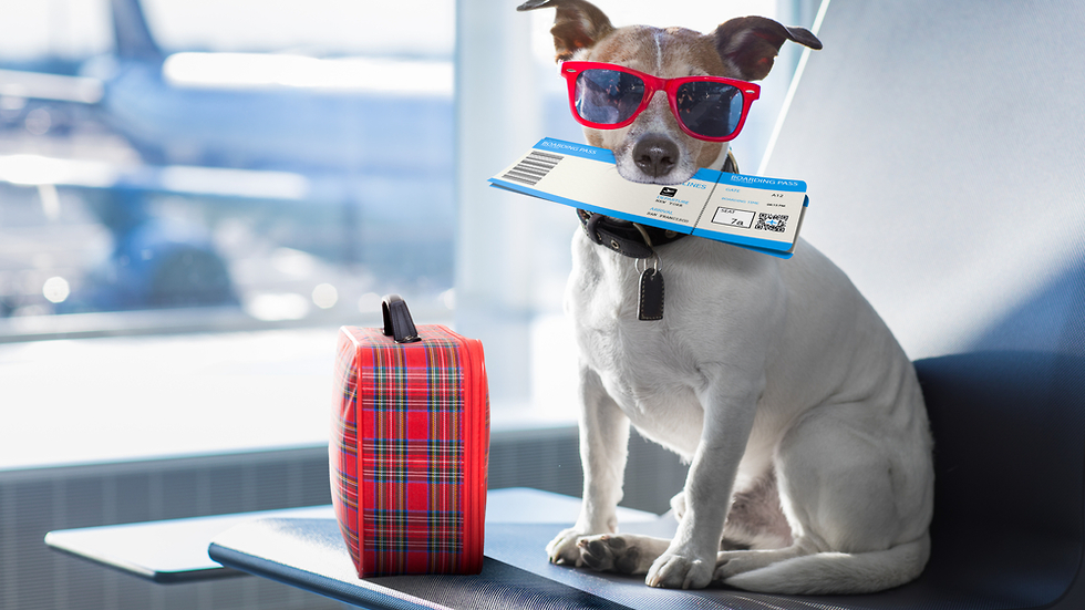 כלב מתכונן לטיסה (צילום: shutterstock)