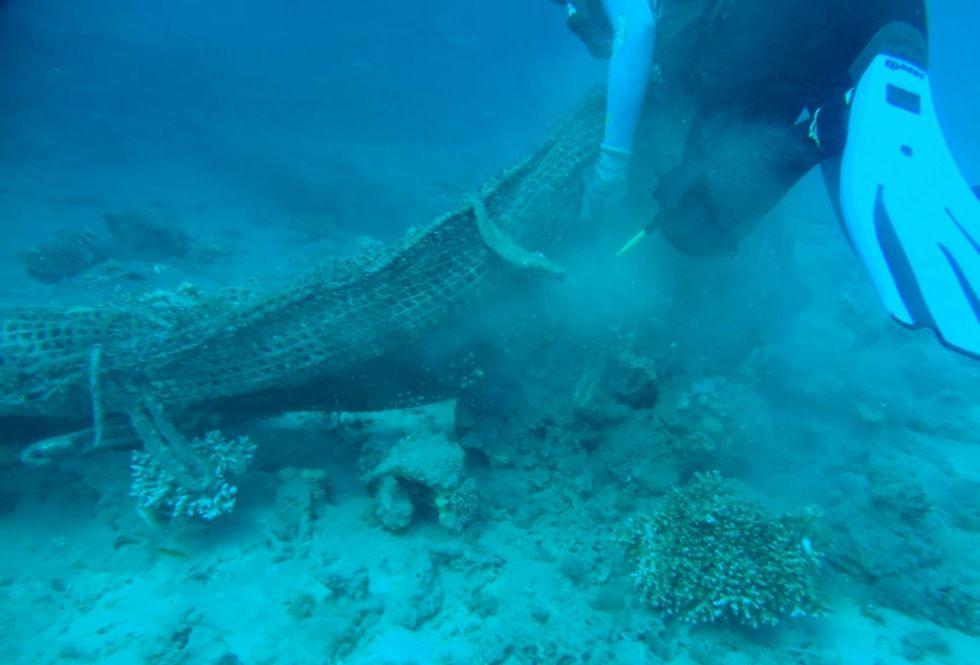 הפגיעה בריף הדולפינים באילת (צילום: הדס ציון)
