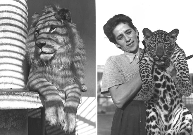 """''בלילות שמענו בבית סבא וסבתא שאגות אריות וצווחות קופים''  (צילום: פין הנס, פריץ כהן, לע""""מ)"""