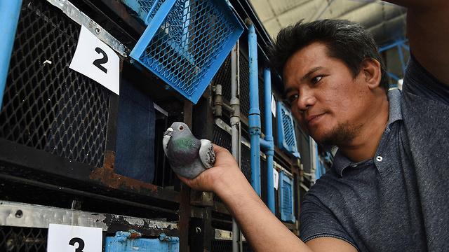 פיליפינים הפיליפינים מירוץ מירוצי יונה יונים (צילום: AFP)