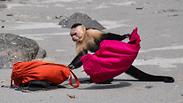 צילום: hbrizard/Istock by Getty