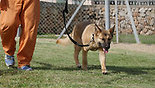 An inmate walks a dog in the Hermon Prison (Photo: SPCA)