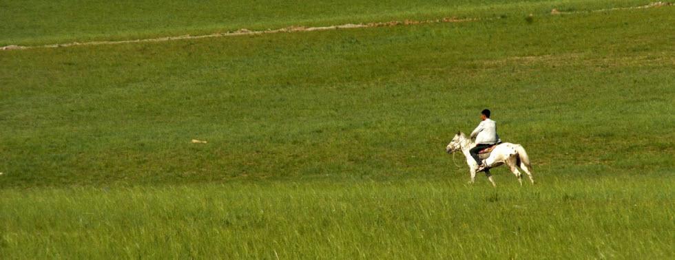 רועה מונגולי (צילום:  יעל דגן)