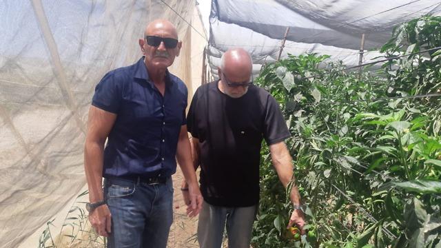 פלפלים ראש המועצה דויד אלחייני משמאל והחקלאי חנן פסטרנק (צילום: אריאל פלר)