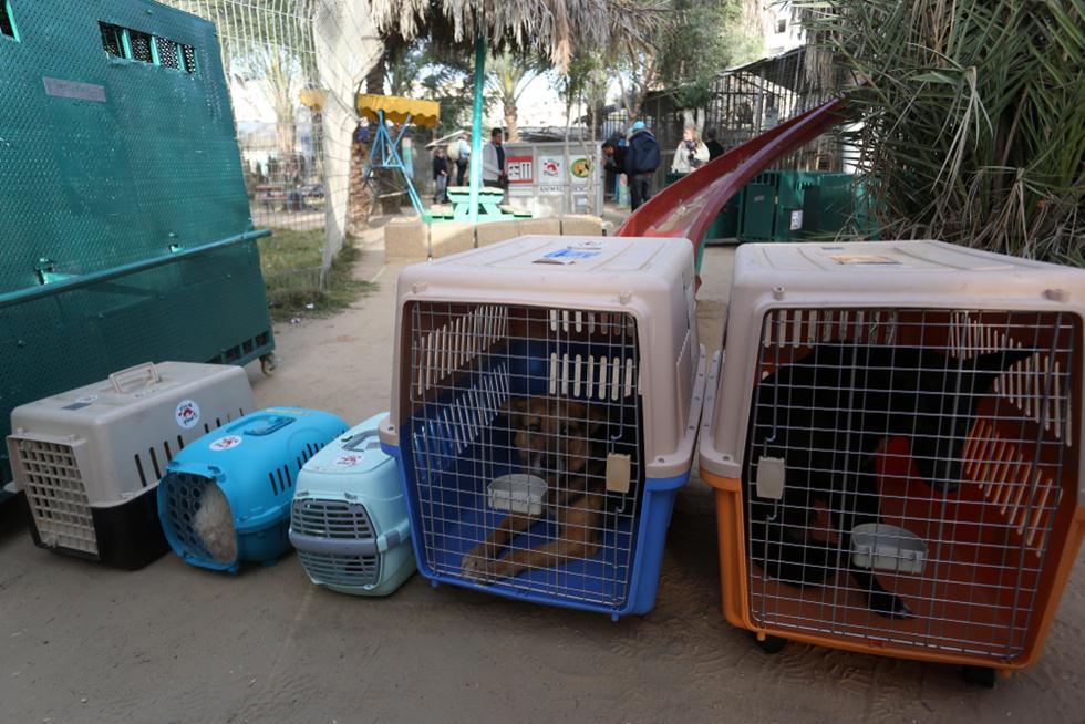 פינוי בעלי חיים מגן חיות בעזה (צילום: shutterstock)