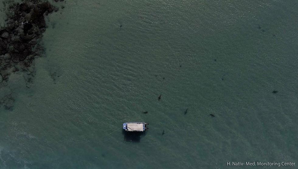 כרישים בחדרה (צילום: חגי נתיב, מרכז מוריס קאהן לחקר הים, ביה