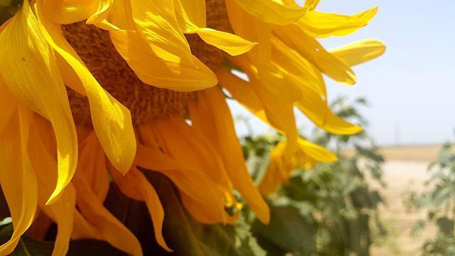 פרח בשער הנגב (צילום: רועי עידן)