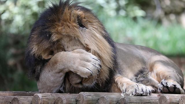 גן החיות התנכ