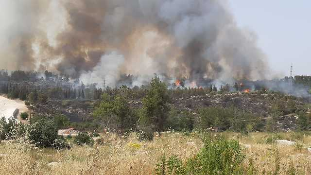 שריפה משתוללת ביער בן שמן (צילום: רועי צור)