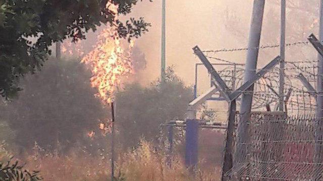 שריפה משתוללת בשילת (צילום: אלעד גבע)