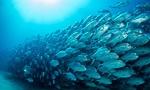 דגים (צילום: shutterstock)