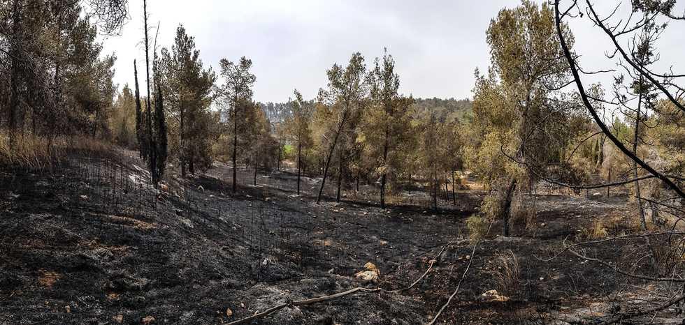 תיעוד של לוחמי האש ביער בן שמן  (צילום: עובדי ויערני קק״ל)