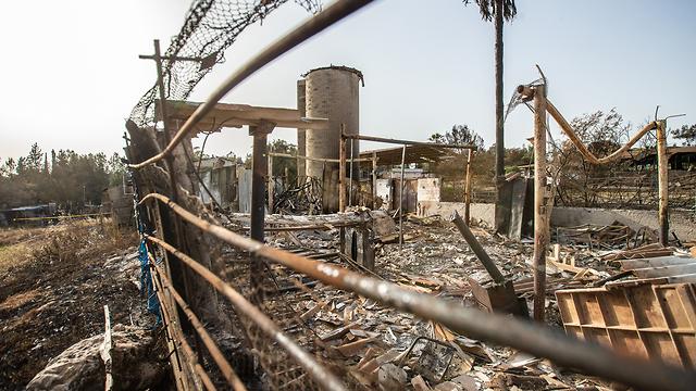 נזקי השריפות בקיבוץ הראל (צילום: טל שחר)