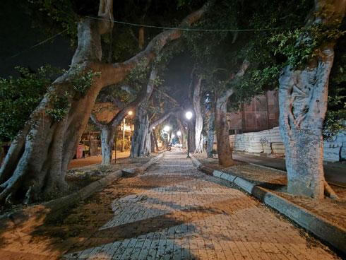 שדרה יפה בלילה (צילום: נעם רוזנברג)