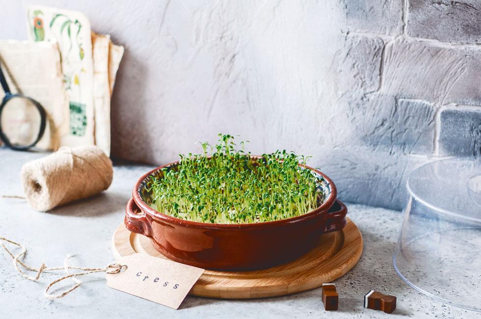 מספיק לאכול 20 גרם עלעלי צנונית כדי לקבל את הקצובה היומית המומלצת של ויטמין E (צילום: Shutterstock)