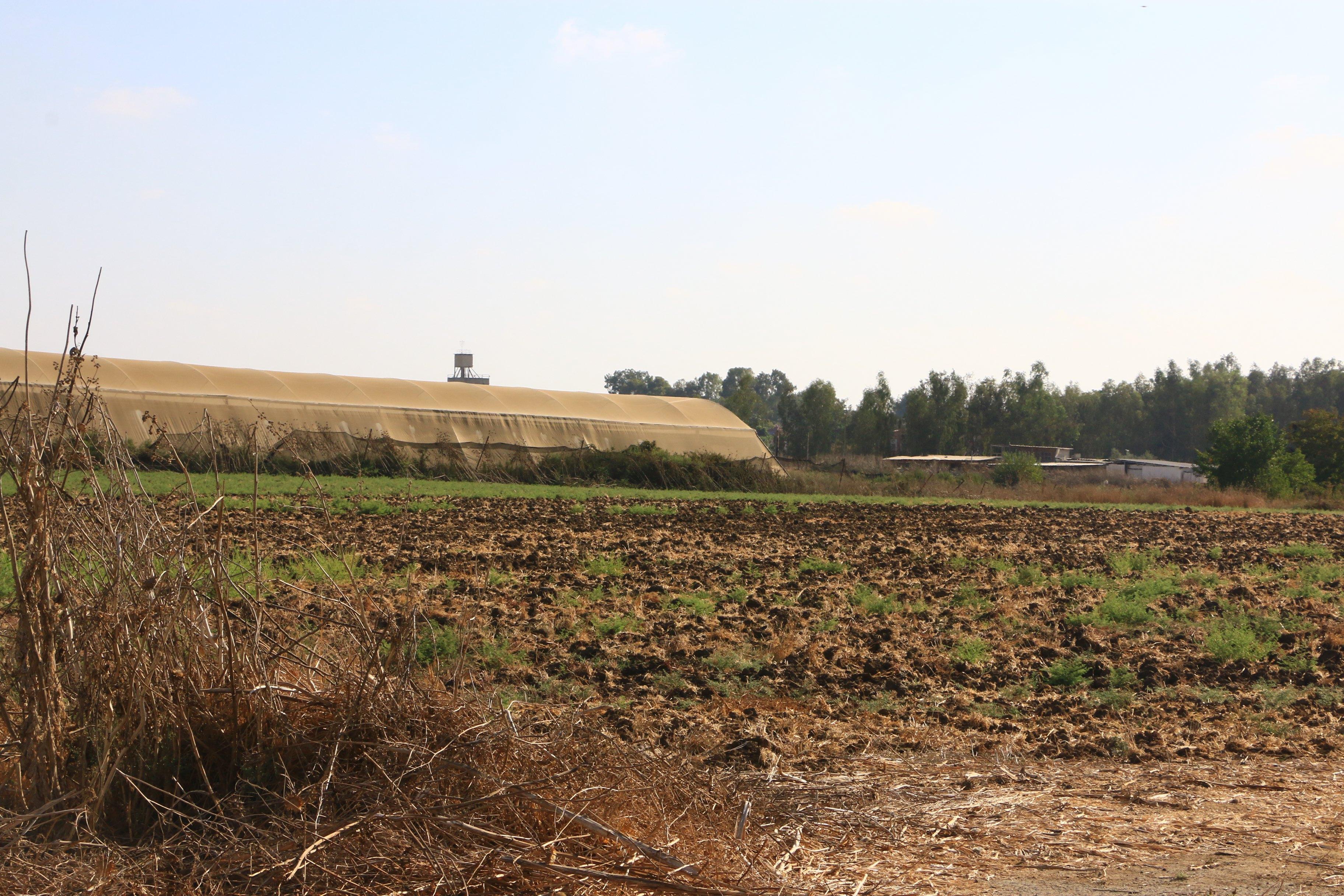 קרקע חקלאית מושב מזור (צילום: דנה קופל)