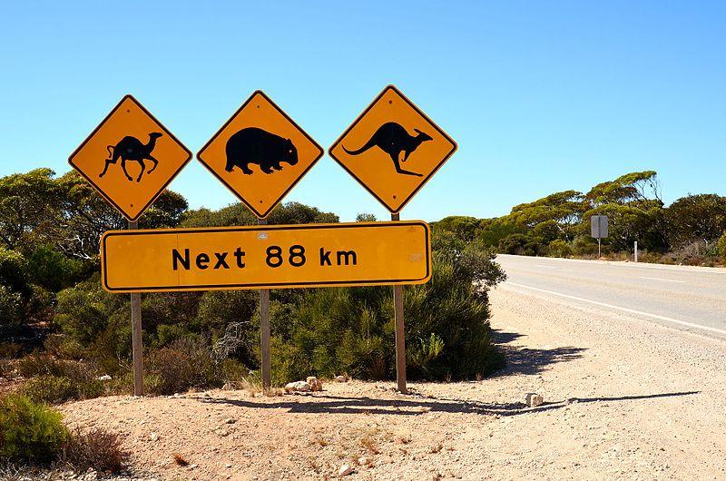 В Австралии животные часто перебегают дорогу, о чем предупреждают и знаки