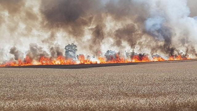 שדה חיטה של קיבוץ כפר עזה נשרף. חשד לבלון תבערה ()