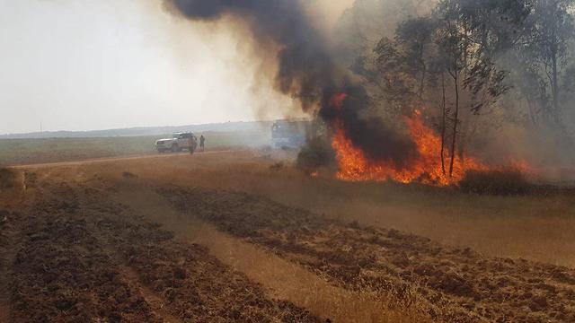 Пожар в лесу Беэри. Фото: ККЛ (Photo: JFL-KKL)