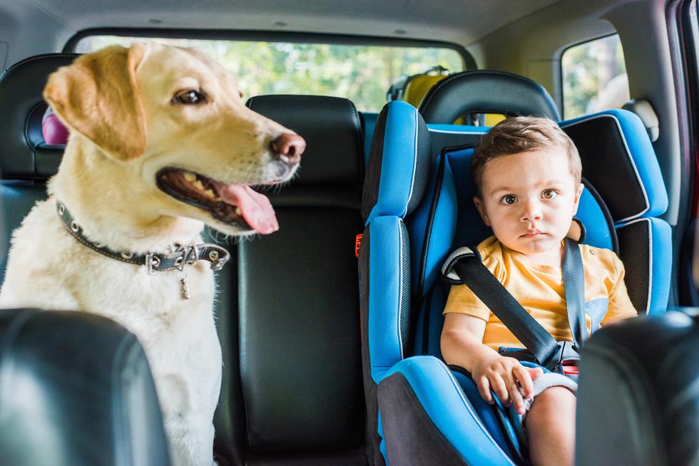 טיול עם כלב (צילום: shutterstock)