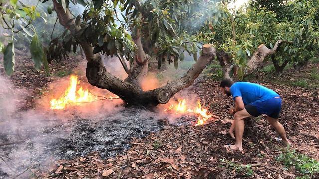 Fire at an avocado plantation (Photo: Rafi Babian)