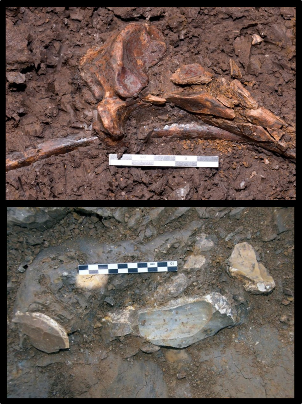 עצמות בעלי חיים (למעלה) ופריטים מסותתים מאבן צור (למטה) (צילום: פרופ' אראלה חוברס, האוניברסיטה העברית)