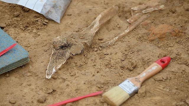 איברים שנקטעו - נקברו באדמה (צילום: רויטרס)