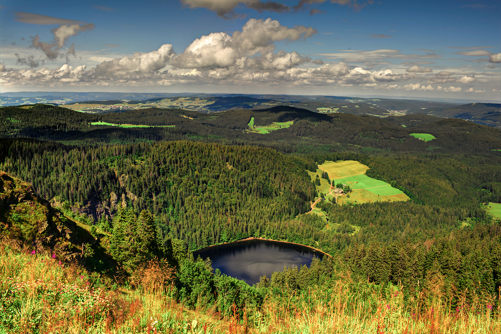 היער השחור גרמניה (צילום: shutterstock)