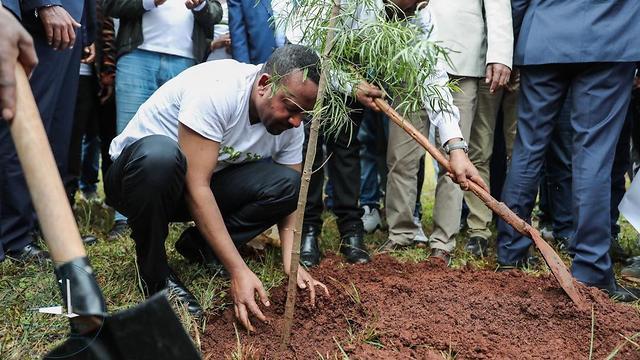 אתיופיה שתילת עצים אביי אחמד ()
