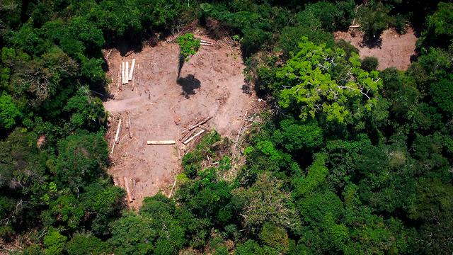 נשיא ברזיל ז'איר בולסונרו כריתת יערות אמזונס (צילום: AFP)