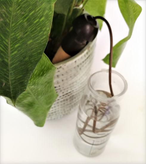 קונוס חימר וצינורית שמחברת בינו לבין צנצנת מים (צילום: רינת טל)