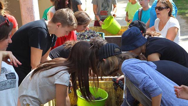 תלמידים מכפר הנוער החקלאי מאיר שפיה מכינים יין (באדיבות כפר הנוער מאיר שפיה)