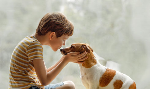 לסייע בעמותות לבעלי חיים (צילום: Shutterstock)