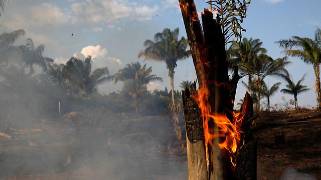 ברזיל שריפות ב אזור ה אמזונס שטח אש  (צילום: רויטרס)