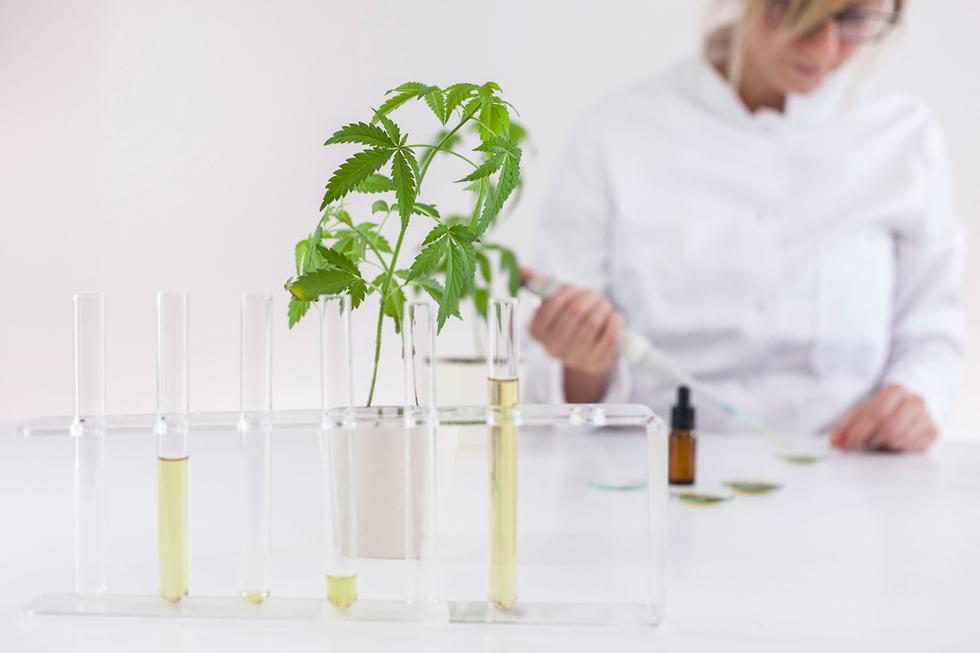 קנאביס רפואי טיפול נשים תרופה  (צילום: sutterstock)